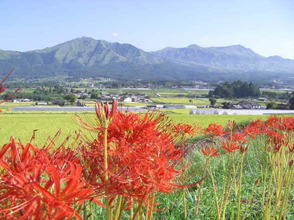 Higanbanatakadake